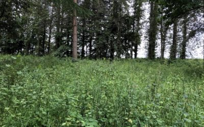 Vegetation and Trees Texture F02