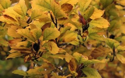 Autumn Leaves Texture F09