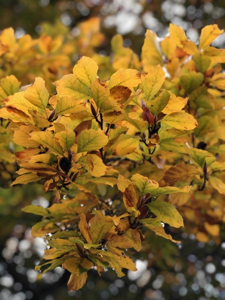 Autumn Leaves Texture F09 1