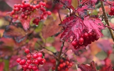 Red Autumn Berries Image F12