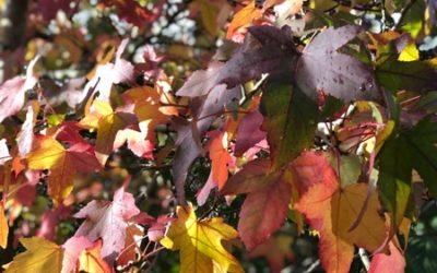 Autumn Leaves Image F14