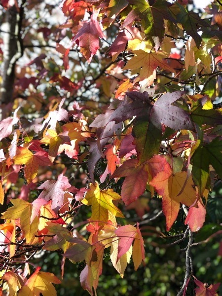 Autumn Leaves Image F14 1