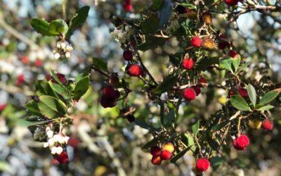 Strawberry Tree Texture F15