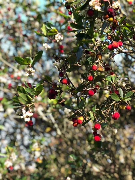 Strawberry Tree Texture F15 1