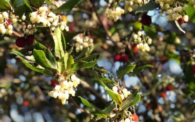 Strawberry Tree Texture F17