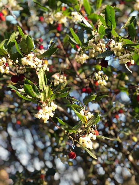 Strawberry Tree Texture F17 1