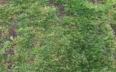 Grass Texture G01