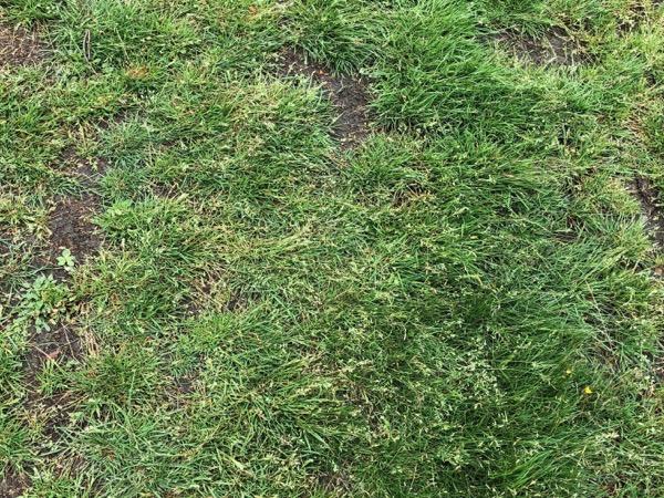 Grass Texture G01 1