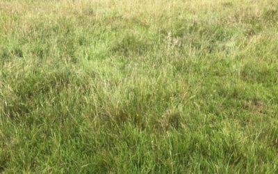 Long Summer Grass Texture G02