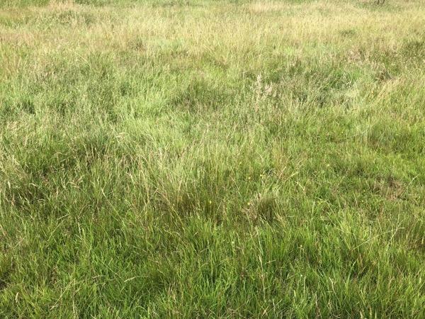 Long Summer Grass Texture G02 1