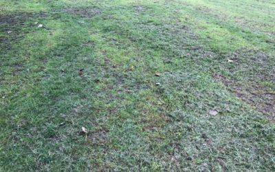 Fresh Cut Grass Texture G03