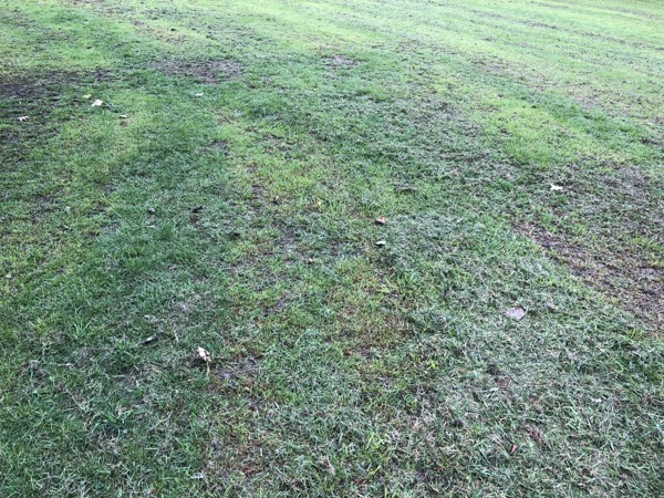 Fresh Cut Grass Texture G03 1