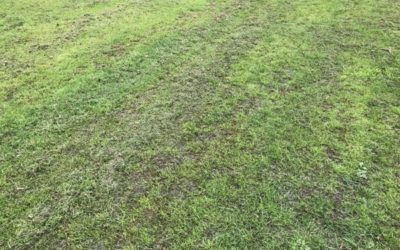 Dark Green Grass Texture G04