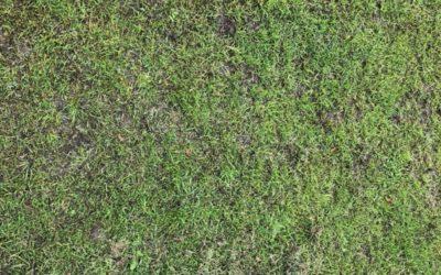 Green Grass Texture G05
