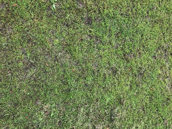 Green Grass Texture G05 1