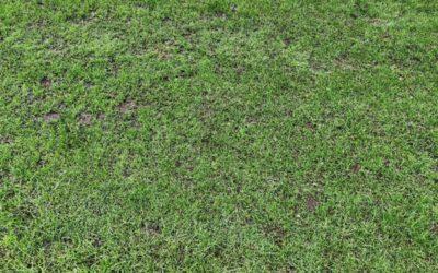 Fine Grass Texture G06