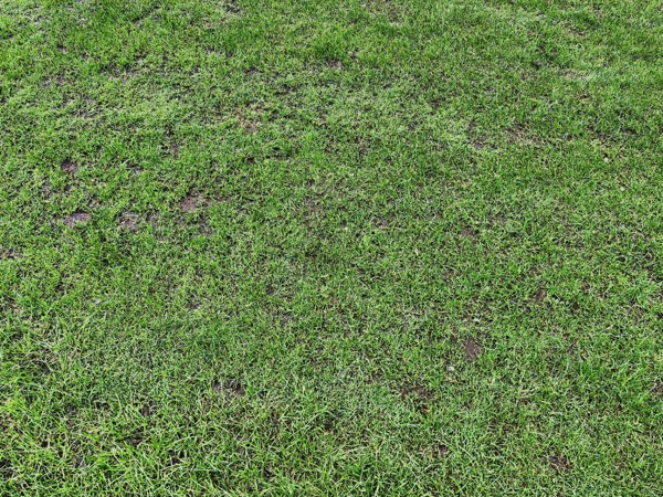 Fine Grass Texture G06 1