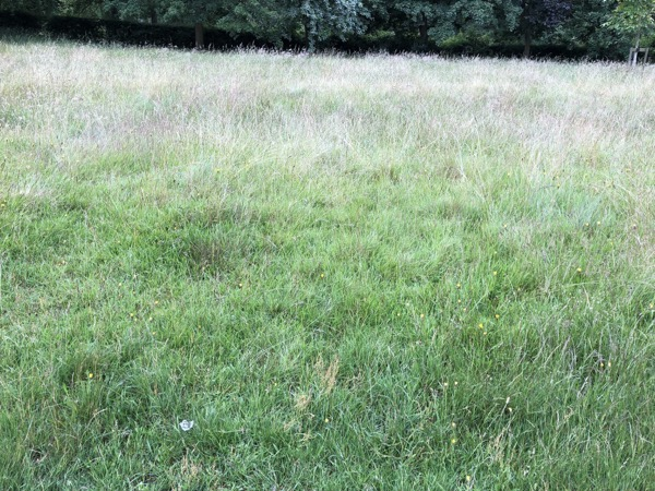 Long Summer Grass Texture G07 1