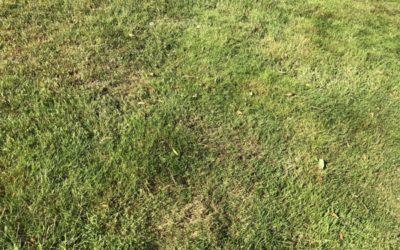 Fine Green Grass Texture G08