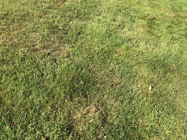 Fine Green Grass Texture G08 1