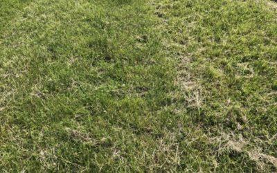 Grass Texture G09