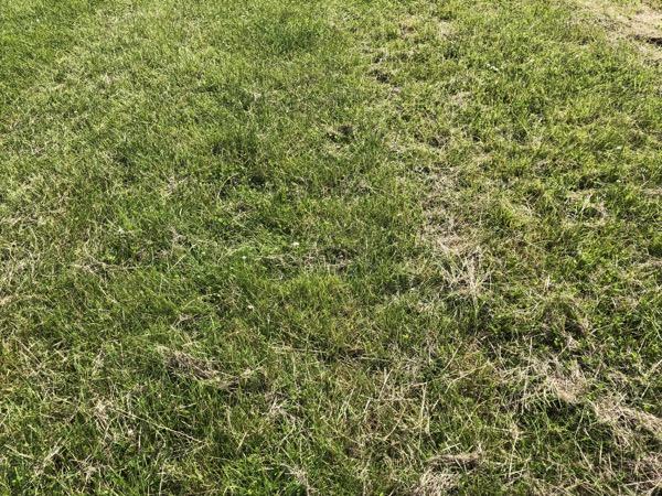 Grass Texture G09 1