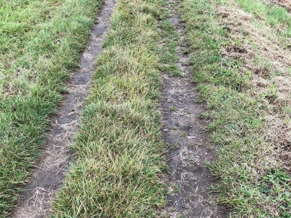 Grass Track Texture G11 1