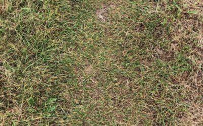 Yellow Grass Texture G12