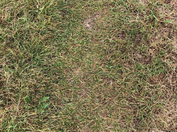 Yellow Grass Texture G12 1