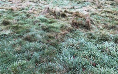 Scruffy Grass Texture G14