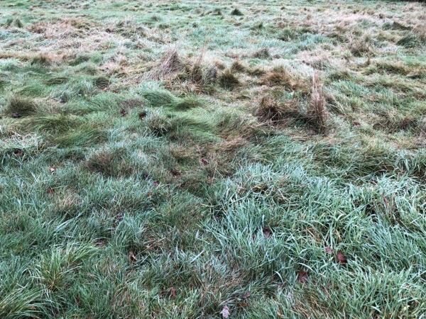 Scruffy Grass Texture G14 1