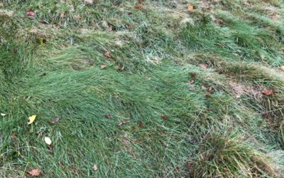Scruffy Grass Texture G15