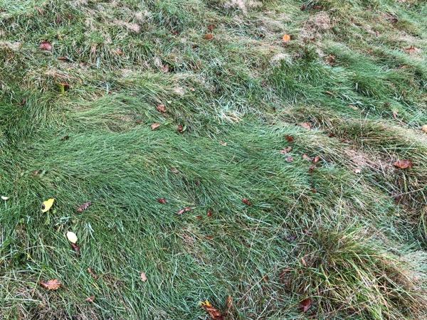 Scruffy Grass Texture G15 1