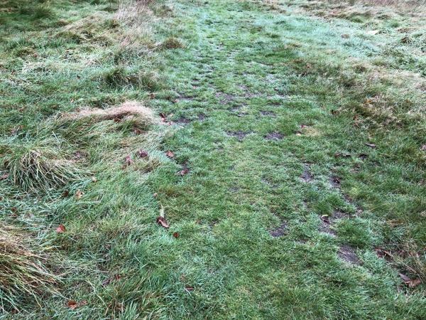 Scruffy Grass Texture G16 1