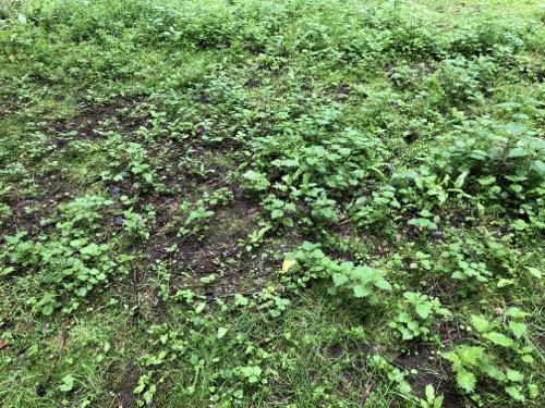 Grassy Scrub Ground Texture GR02 1