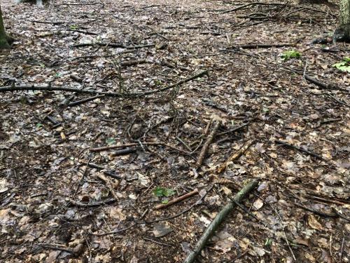 Woodland floor texture GR03 1