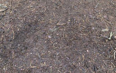 Pine Forest Ground Texture GR05