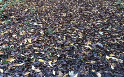 Leaves on the Ground texture GR06