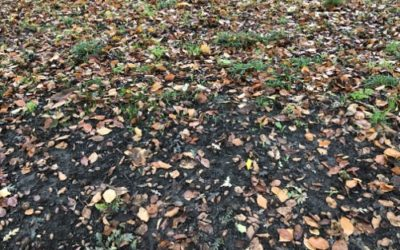 Autumn Leaves Ground Texture GR07