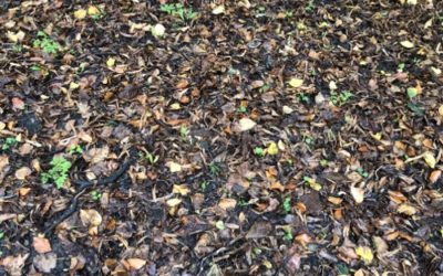 Leaves Ground texture GR08