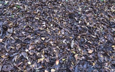 Wet Leaves Ground Texture GR09