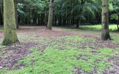 Woodland Background L01