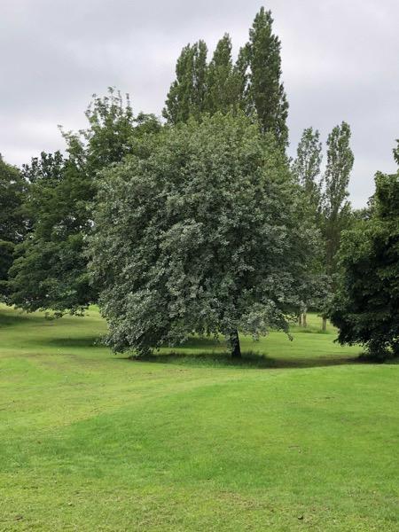 Landscape Background Image L07 1