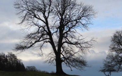 Tree silhouette image T01