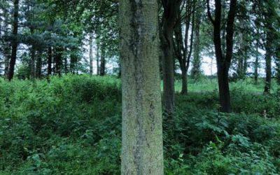 Tree bark image T02