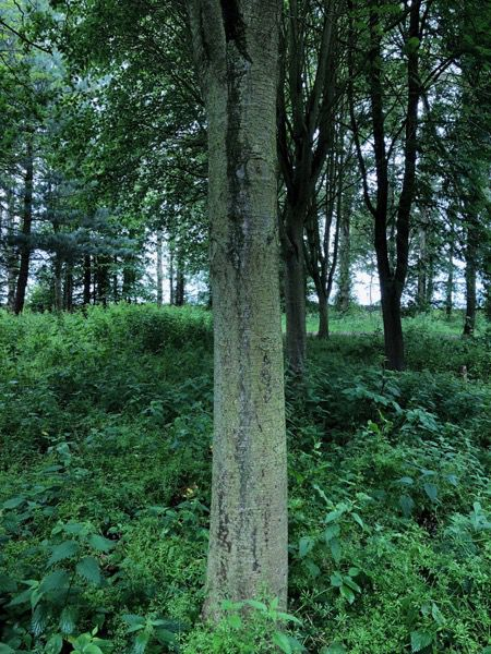 Tree bark image T02 1