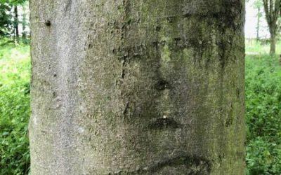 Tree bark texture T03