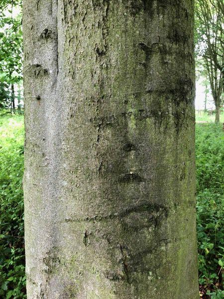 Tree bark texture T03 1