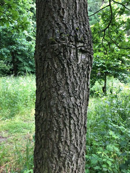 Tree bark image T04 1