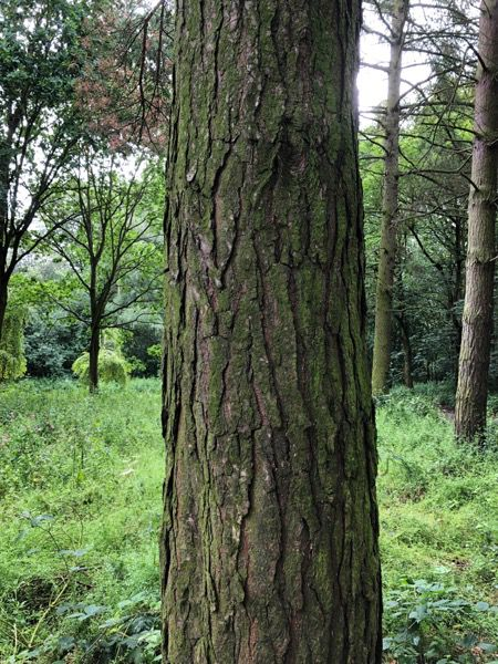 Tree bark texture T08 1